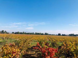 Vie de la vigne